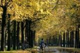 الخريف أفضل الفصول لتجديد النشاط الإنساني
