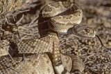 كيف نجا أمريكي من الثعابين بعدما بقي معها داخل حفرة عميقة ليومين
