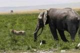 البشرية قضت على 60 في المئة من حيوانات العالم