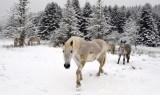 البرد يقتل شابا جزائريا حاول تهريب السجائر عبر جبال فرنسا