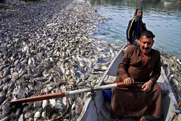 أسماك نافقة في العراق