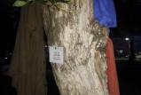 متطوعون يضعون ثيابًا على جذوع الأشجار لفائدة أشخاص دون مأوى بمراكش
