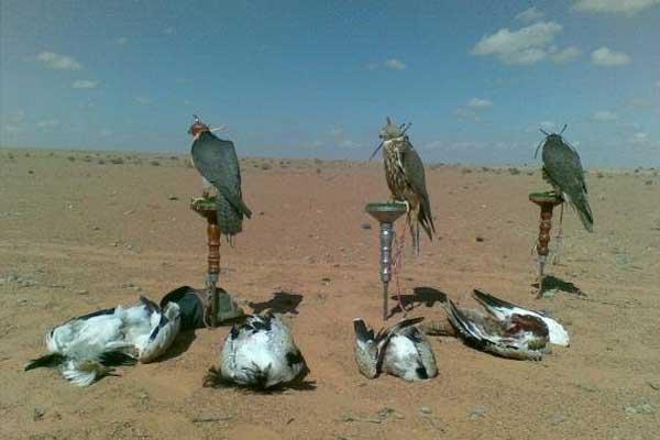 صيد طائر الحبار (صورة من الأرشيف)