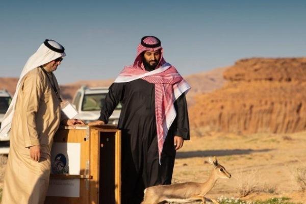 الأمير محمد بن سلمان يُطلق محمية
