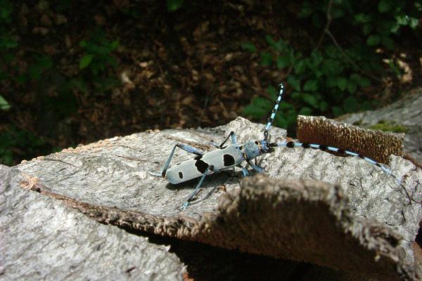 تنخفض أعداد الحشرات بنسبة حادة تبلغ 2.5 في المئة سنوياً