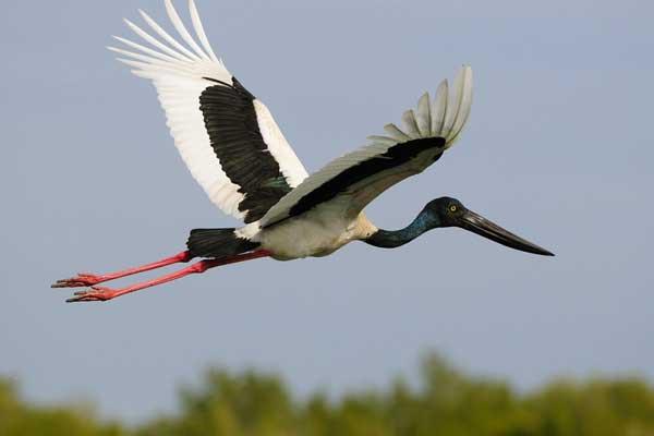 في مثل هذا الوقت من العام يتجه طائر اللقلق في هجرة عكسية من أفريقيا إلى أوروبا