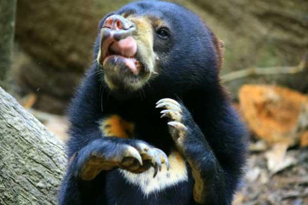 تفوق الإنسان نظرية تتضاءل مع استنتاج العلماء أن التواصل المعقد للوجه ممكن بين بعض الحيوانات