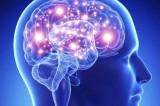 دراسة: البشر يستمرون في إنتاج خلايا عصبية جديدة طيلة حياتهم