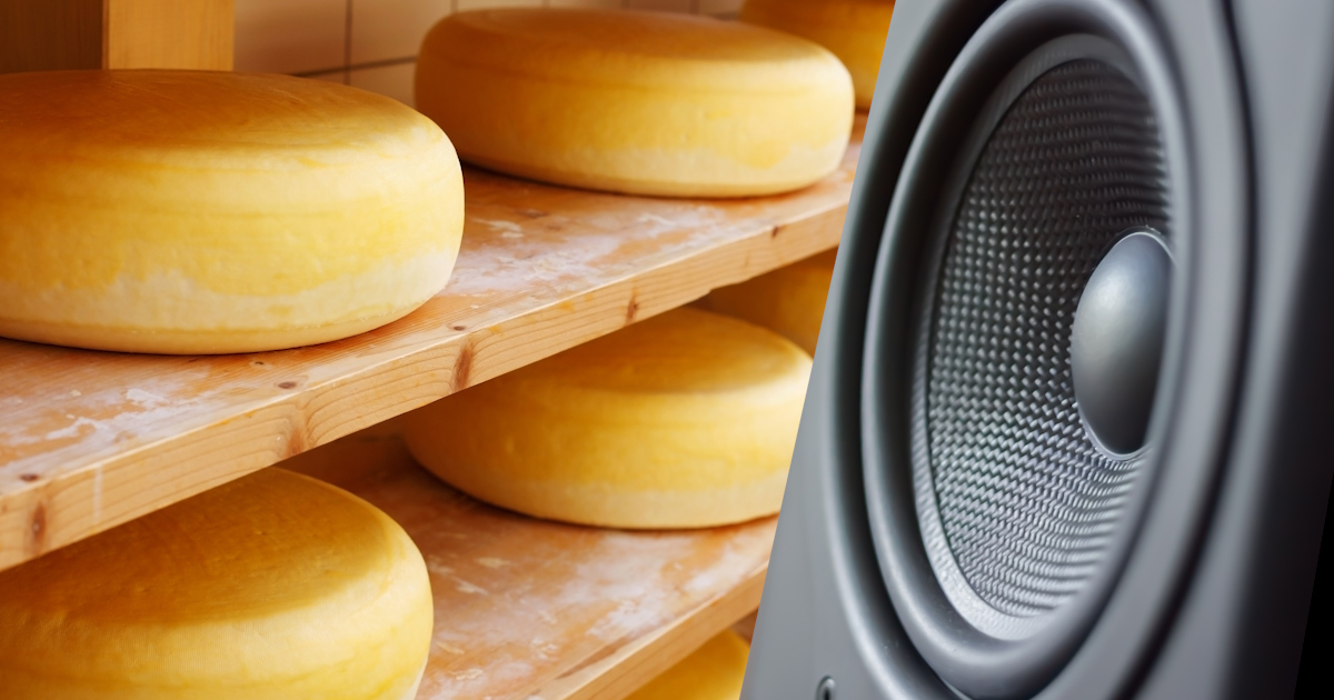الجبن يحلو طعما إذا ما تعرّض للموسيقى