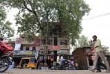 شجرة عمرها 150 عاما تتوسط مبنى في الهند