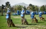 الكلاب المدرّبة أفضل صديق للأفغان في مكافحة الألغام