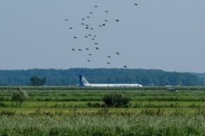 طائرة شركة طيران اورال ايه321 بعد أن هبطت اضطراريا في حقل ذرة قرب مطار زوكوفسكي في 15 أغسطس 2019
