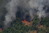 ترمب يعرض المساعدة في مكافحة حرائق الأمازون