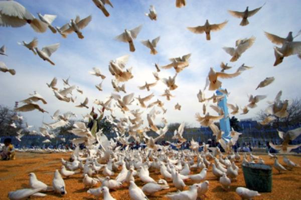 الجمعية العامة تقر اعلان الحق في السلام بدعم من منظمات المجتمع المدني