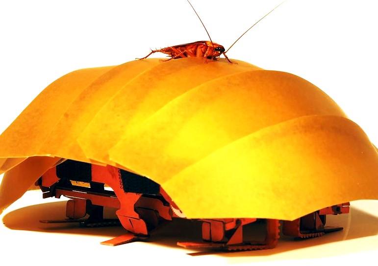 الصراصير مصدر الهام لتصميم روبوتات تزحف وتدخل الشقوق بين الانقاض