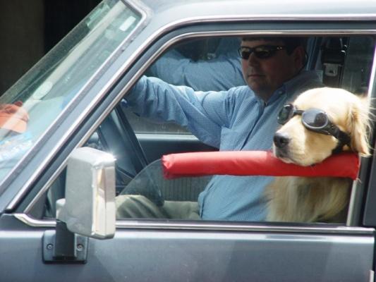 تتلقى الكلاب الكثير من المعلومات عندما تزداد السرعة من حولهم