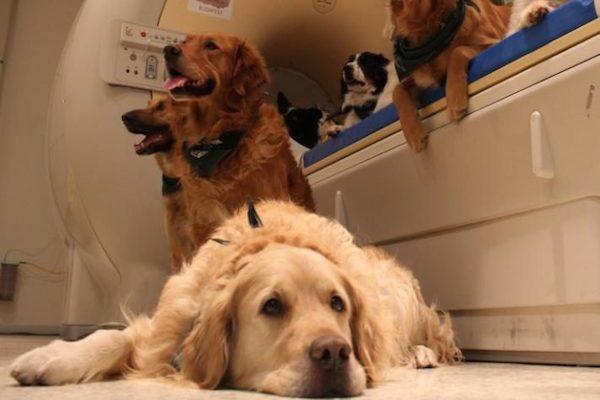 وضع الكلاب في ماكينة لدراسة أدمغتهم