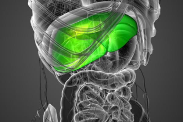 اكتشاف بروتين مسؤول عن تهريب الدهون السيئة من الكبد إلى الدم