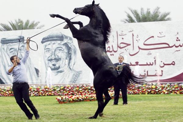 من بطولة عجمان الدولية لجمال الخيول