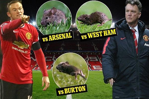 مانشستر يونايتد يخوض معركة مع الفئران في أولد ترافولد