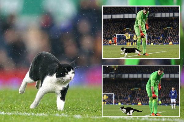 قط مشاغب يقتحم مباراة بكأس إنكلترا ويتسبب في إيقافها