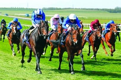 خيول غودلفين تظهر في أستراليا من خلال 12 سباقاً في مايو المقبل