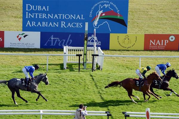 من سباق دبي الدولي للخيول العربية الأصيلة في النسخة الماضية