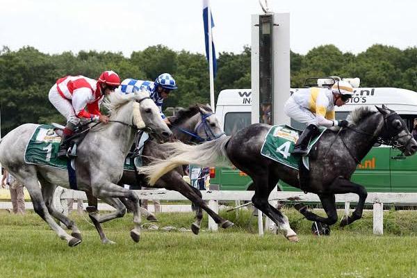 إنطلاق الجولة التاسعة لكأس زايد للخيول العربية