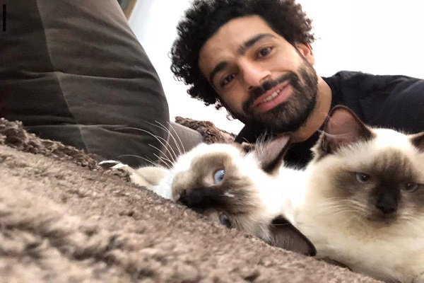 محمد صلاح يرفض تصدير القطط والكلاب من مصر