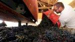 فيروس كورونا: صناعة الشمبانيا الفرنسية تعاني وسط الوباء