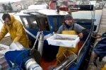 كورونا يشلّ الزراعة وصيد الأسماك في إسبانيا