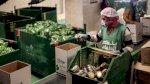 مصر: الاقتصاد ينمو لكن الفقر على حاله