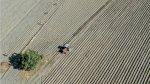 2021: سنة الصحوة في سوق المواد الأولية الزراعية
