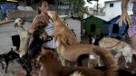 كوبا تتعهد إصدار تشريع لحماية الحيوانات قبل نهاية فبراير