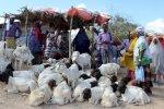 كورونا وتقليص الحج يضربان قطاع الماشية الصومالي