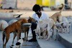 باحث يحذر من مليوني فيروس قد ينتقل من الحيوان الى البشر