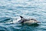 الاحتباس الحراري يهدد بانقراض 60% من الأسماك