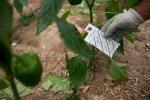 نباتات تمتص البلاستيك وتنتهي في طعامنا
