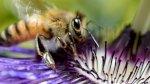 سم النحل يقتل الخلايا السرطانية للثدي