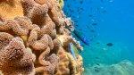 دراسة: الضوضاء تضعف مناعة الأسماك