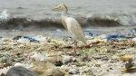 المخلفات البلاستيكية المنتشرة في المحيطات تخنق الحياة البحرية