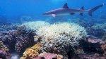 ثلث الشعاب المرجانية في تايوان تنازع بسبب الابيضاض