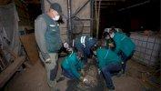فيروس كورونا: العثور على ثالث أسد أمريكي في شوارع سانتياغو