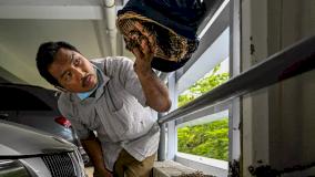 عضو في الجمعية يحاول إنقاذ عش من النحل
