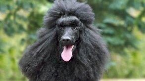 كلب يقود الشرطة إلى القبض على صاحبته الألمانية بعد عام من