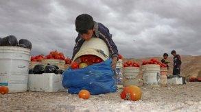 كورونا وعمالة الأطفال: