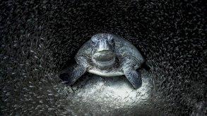 بالصور: الإعلان عن الفائز بجائزة مصور المحيطات لعام 2021