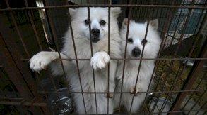 رئيس كوريا الجنوبية: حان الوقت للنظر في حظر استهلاك لحوم الكلاب
