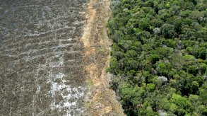 مجموعات أوروبية للبيع بالتجزئة تهدد بمقاطعة البرازيل بسبب إزالة الغابات