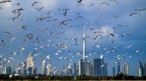 الإمارات تطمح للمحافظة على جاذبيتها للأعمال رغم الضريبة العالمية